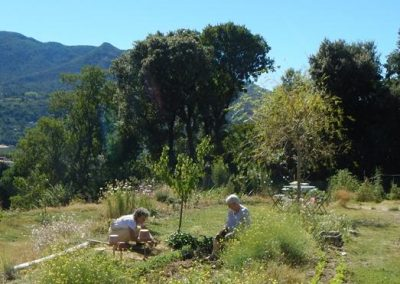 phytobiorealisme-permaculture